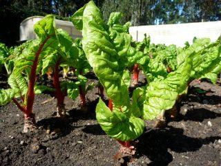 is organic food better