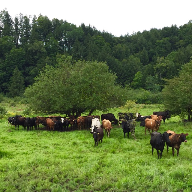 3 reasons to eat grass-fed dairy